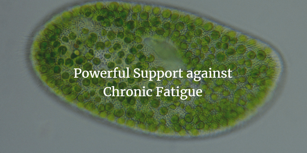 Chlorella + Phytoplankton for Chronic Fatigue Syndrome